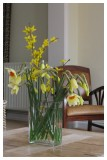 Daffodils in the living room